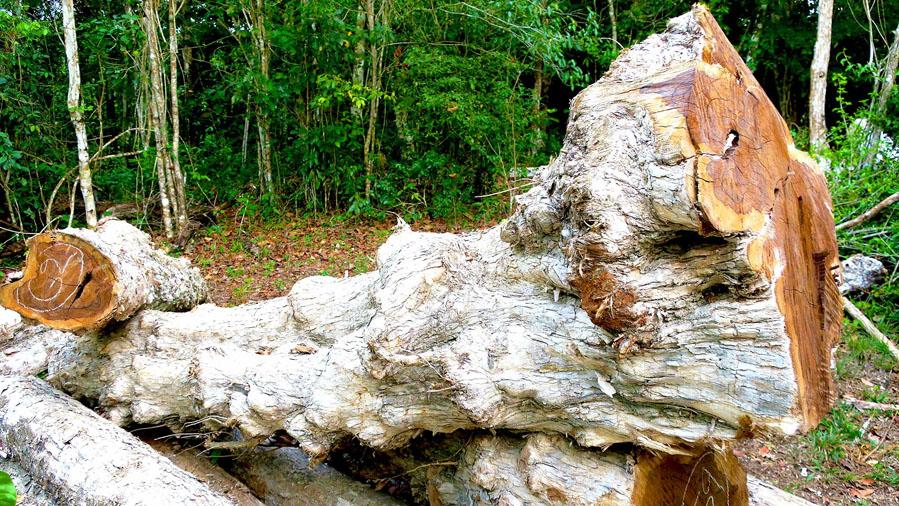 sculture legno